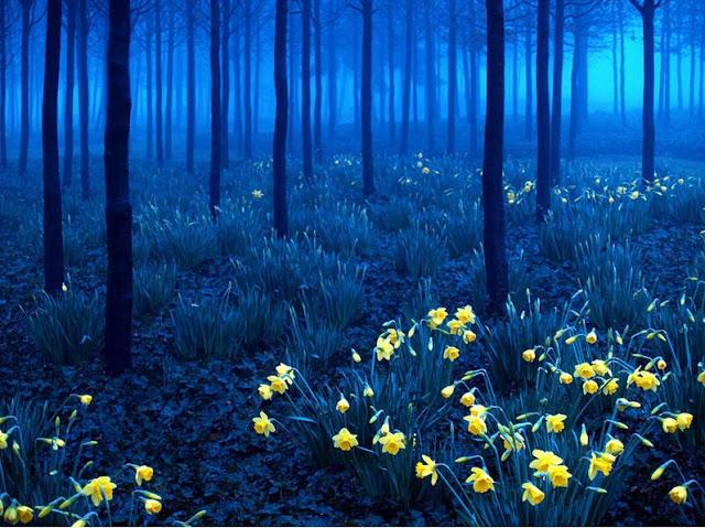 Floresta Negra, na Alemanha