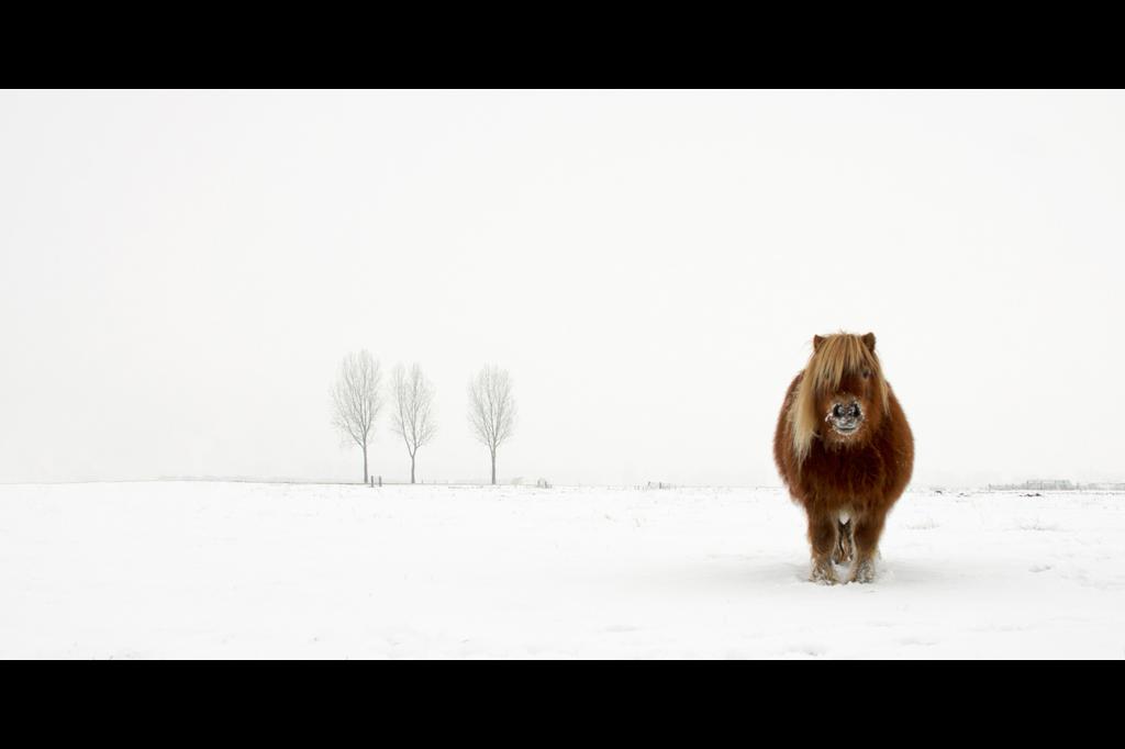 Gert van den Bosch - Natureza/Vida Selvagem