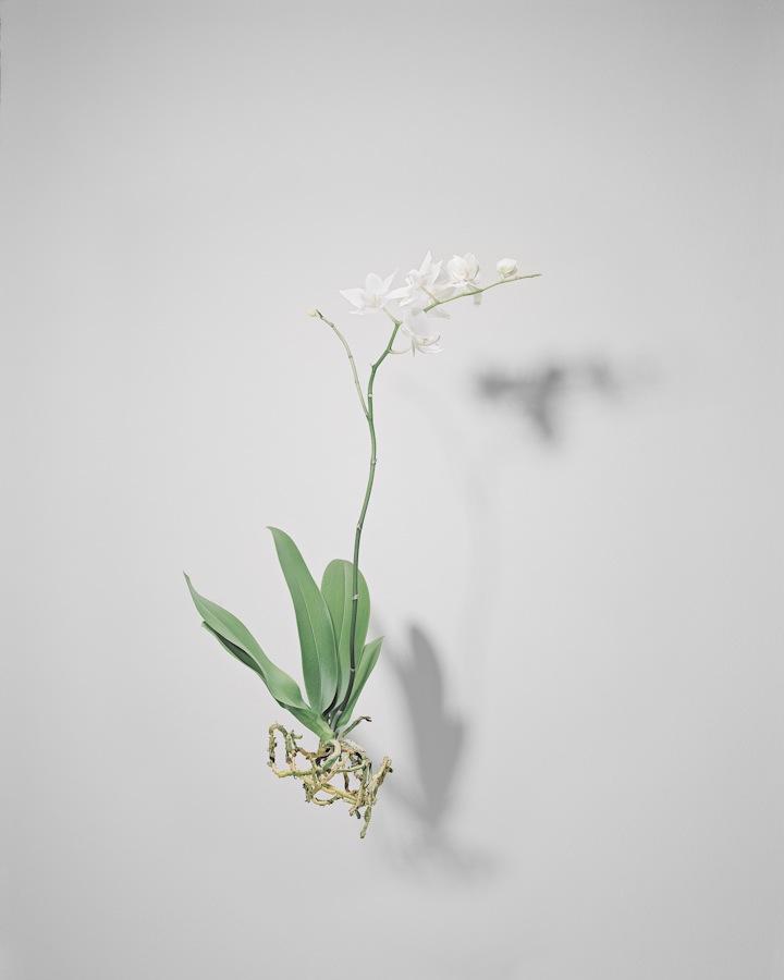 © Matthias Schade - Flowers