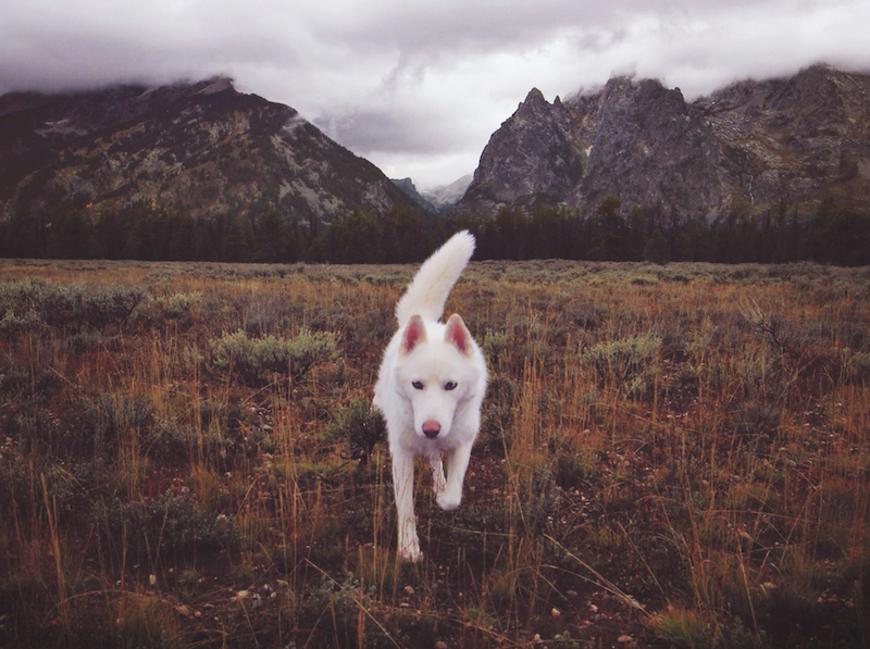 Wolf_and_Dog_07
