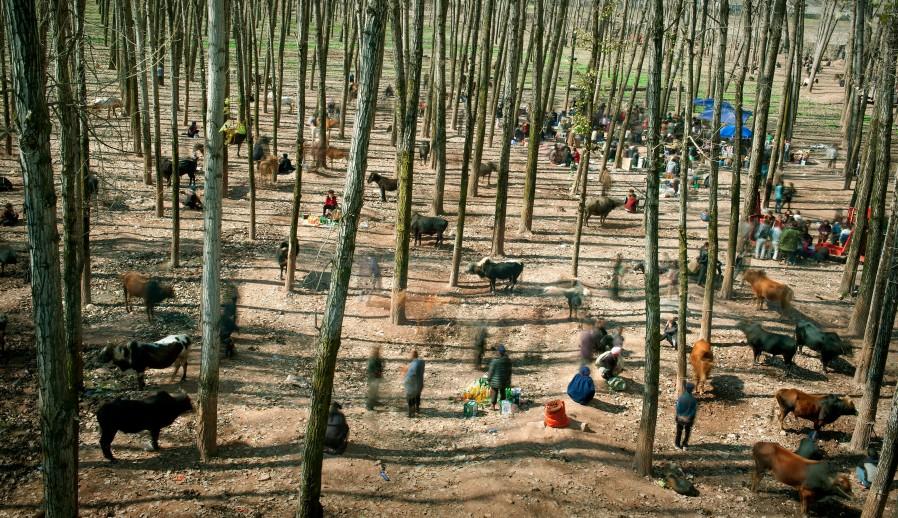 © Cai Sheng Xiang -  The Bull Market