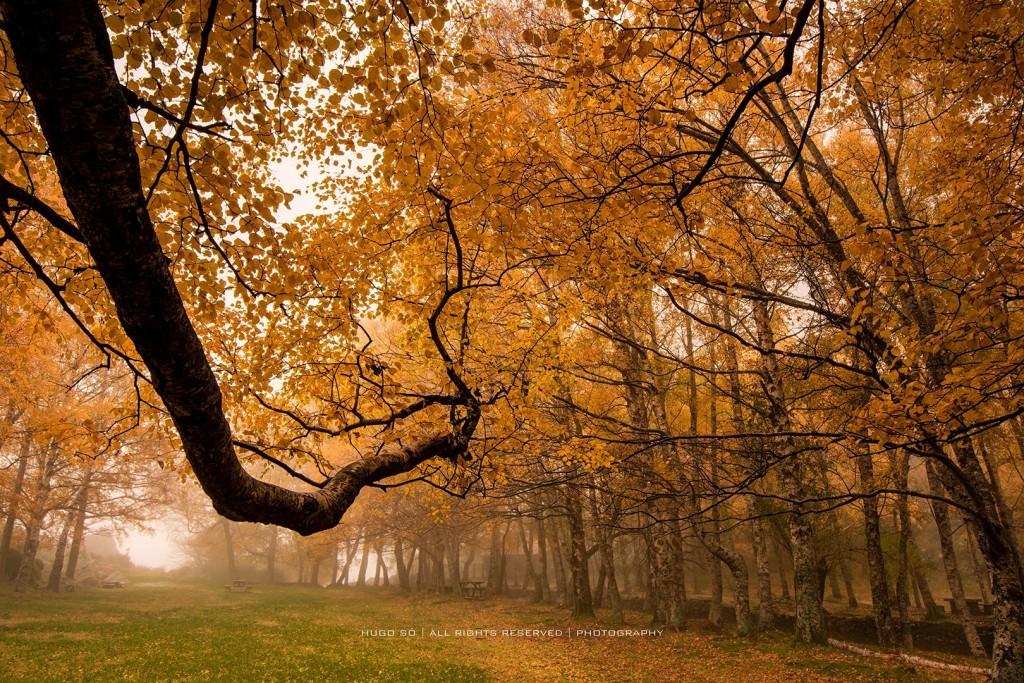 Dias de Outono © Hugo Só
