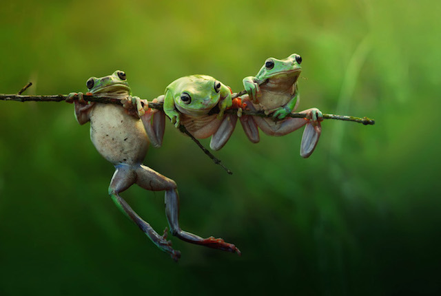 Photo by Harfian Herdi, Indonesia, Shortlist, Nature &Wildlife, Open, 2015 Sony World Photography Awards.