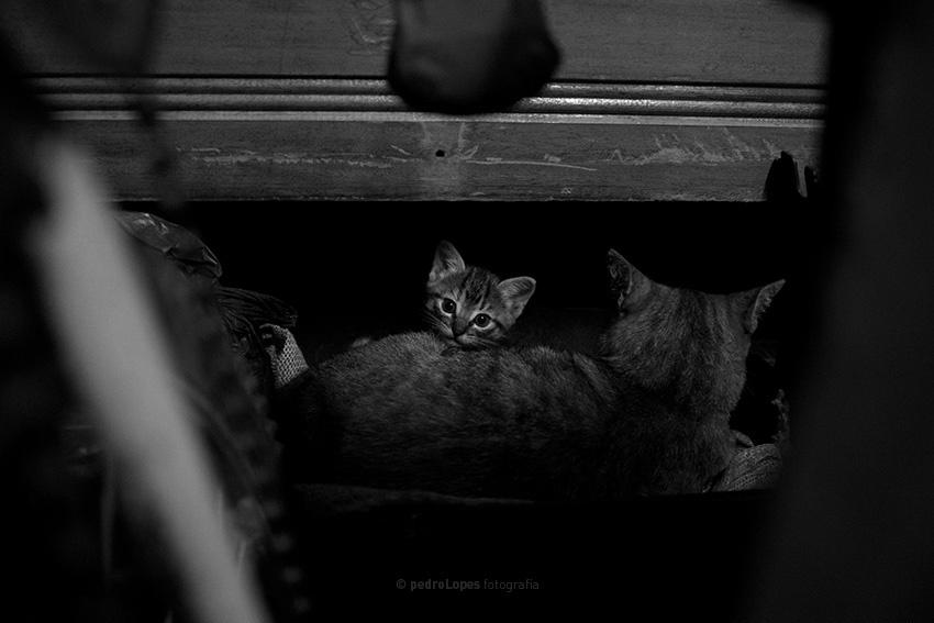 """""""My Little Cat"""" de Pedro Lopes."""