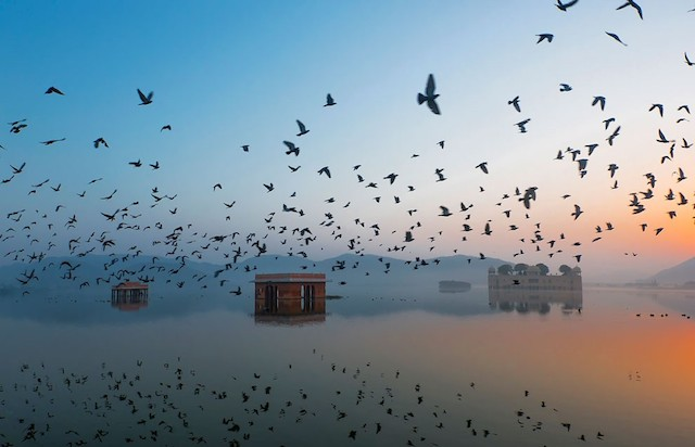 Jal Mahal during Sunrise. Photo and caption by Ravikanth Kurma.