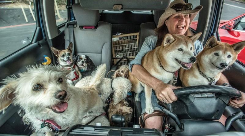 """""""Passeadores de cães"""", um retrato da profissão na Califórnia, nos EUA, venceu a categoria das """"15h00"""""""