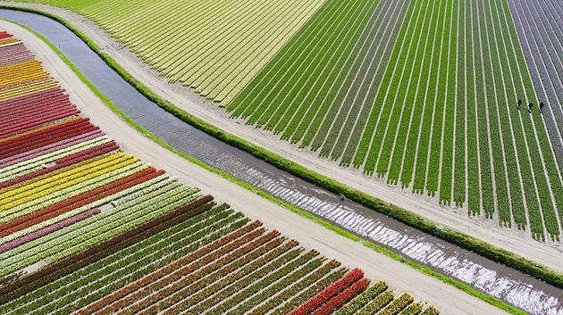 3º Lugar – Categoria Lugares: Tulip fileds por Anders@andersa.com