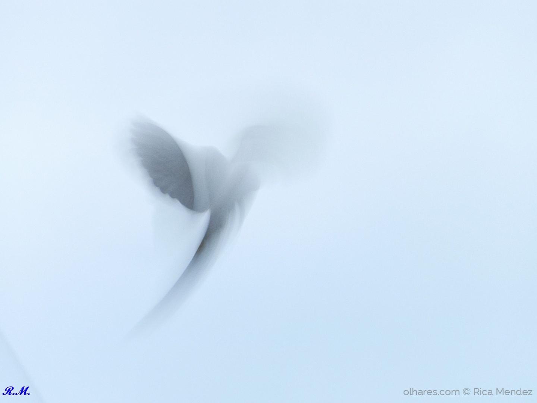 © Rica Mendez - Pomba na hora de levantar voo