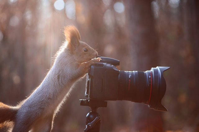 Cute-Squirrel-Photo-Shoot_11