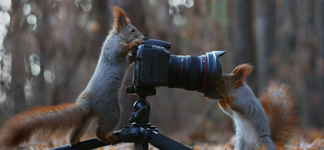 Cute-Squirrel-Photo-Shoot_12