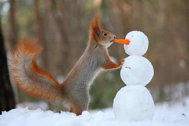 Cute-Squirrel-Photo-Shoot_2