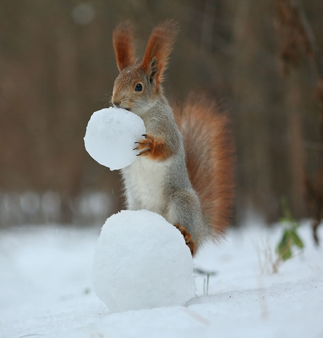 Cute-Squirrel-Photo-Shoot_3
