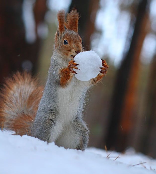 Cute-Squirrel-Photo-Shoot_5