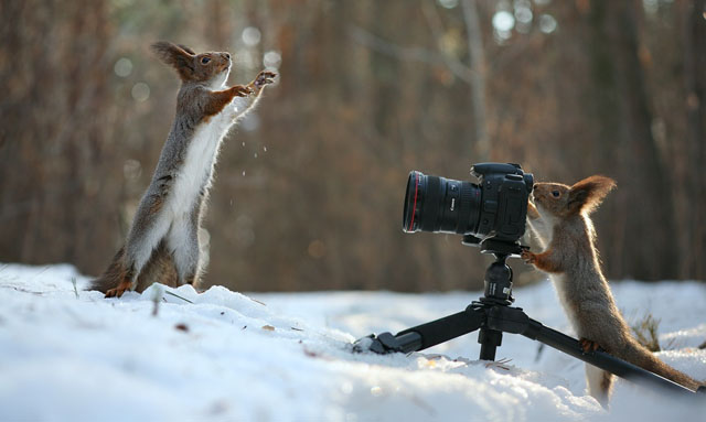 Cute-Squirrel-Photo-Shoot_8