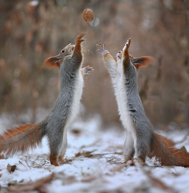 Cute-Squirrel-Photo-Shoot_9