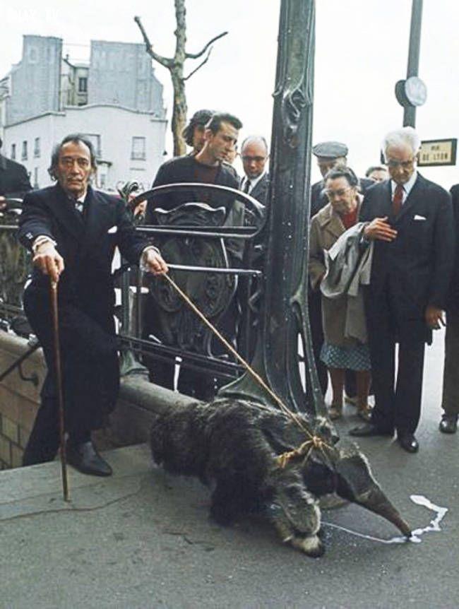 Salvador Dali com o seu papa-formigas.