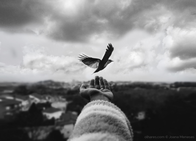 """Instant Whisper"""" como Fotografia da Semana 52. © Joana Meneses"""