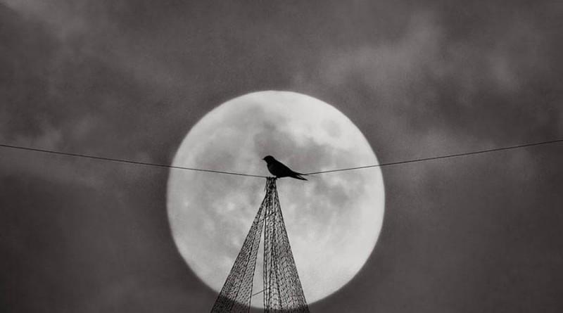 birdwatching-0-900x674