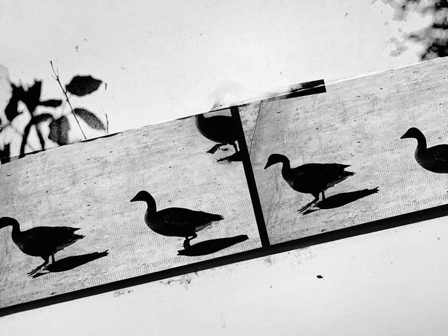 birdwatching-10-900x675