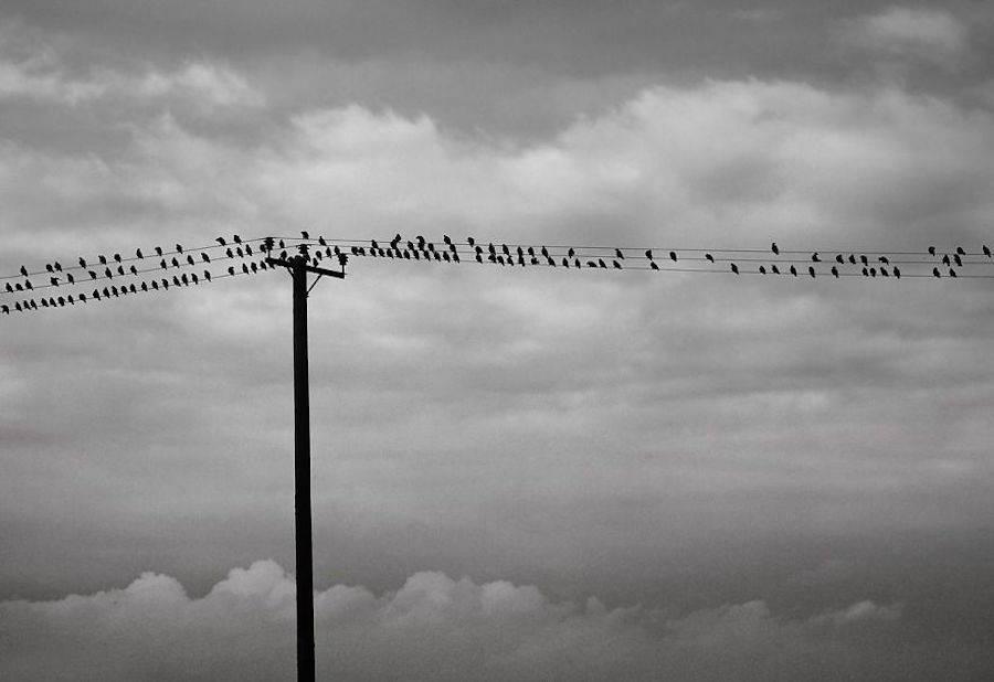birdwatching-4-900x618