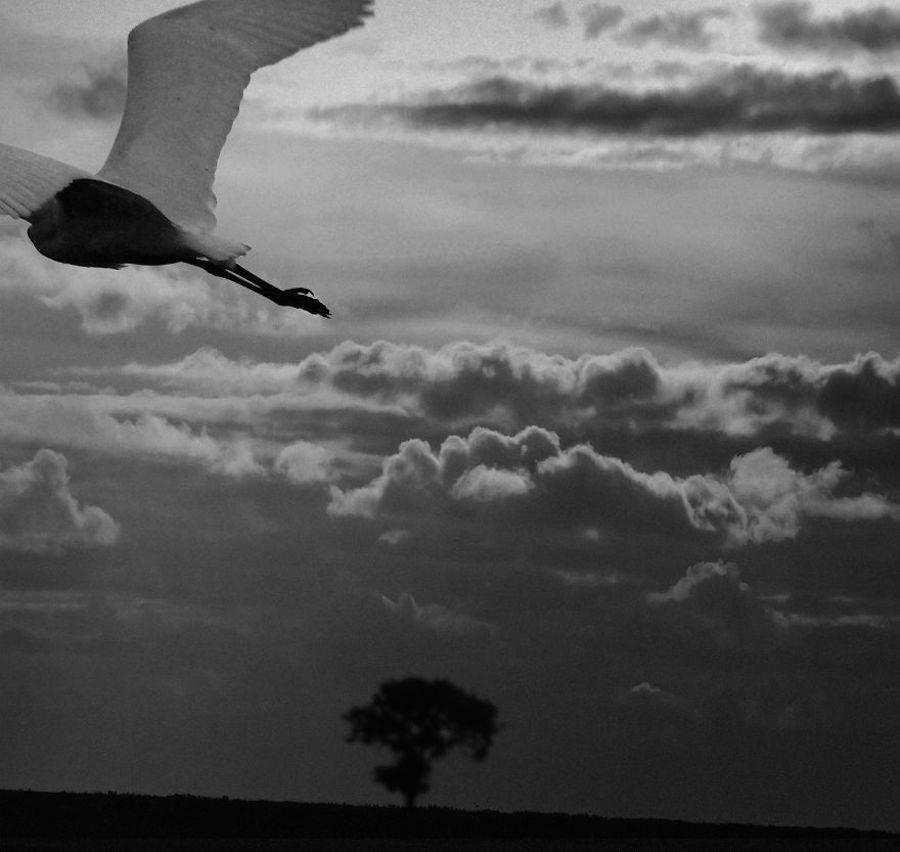 birdwatching-5-900x852