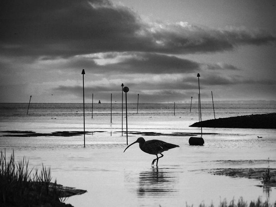birdwatching-6-900x675