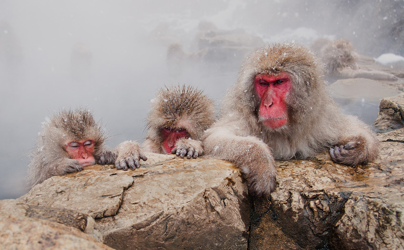 """A Monkey Onsen"", by Christopher Yeoh, from Australia"