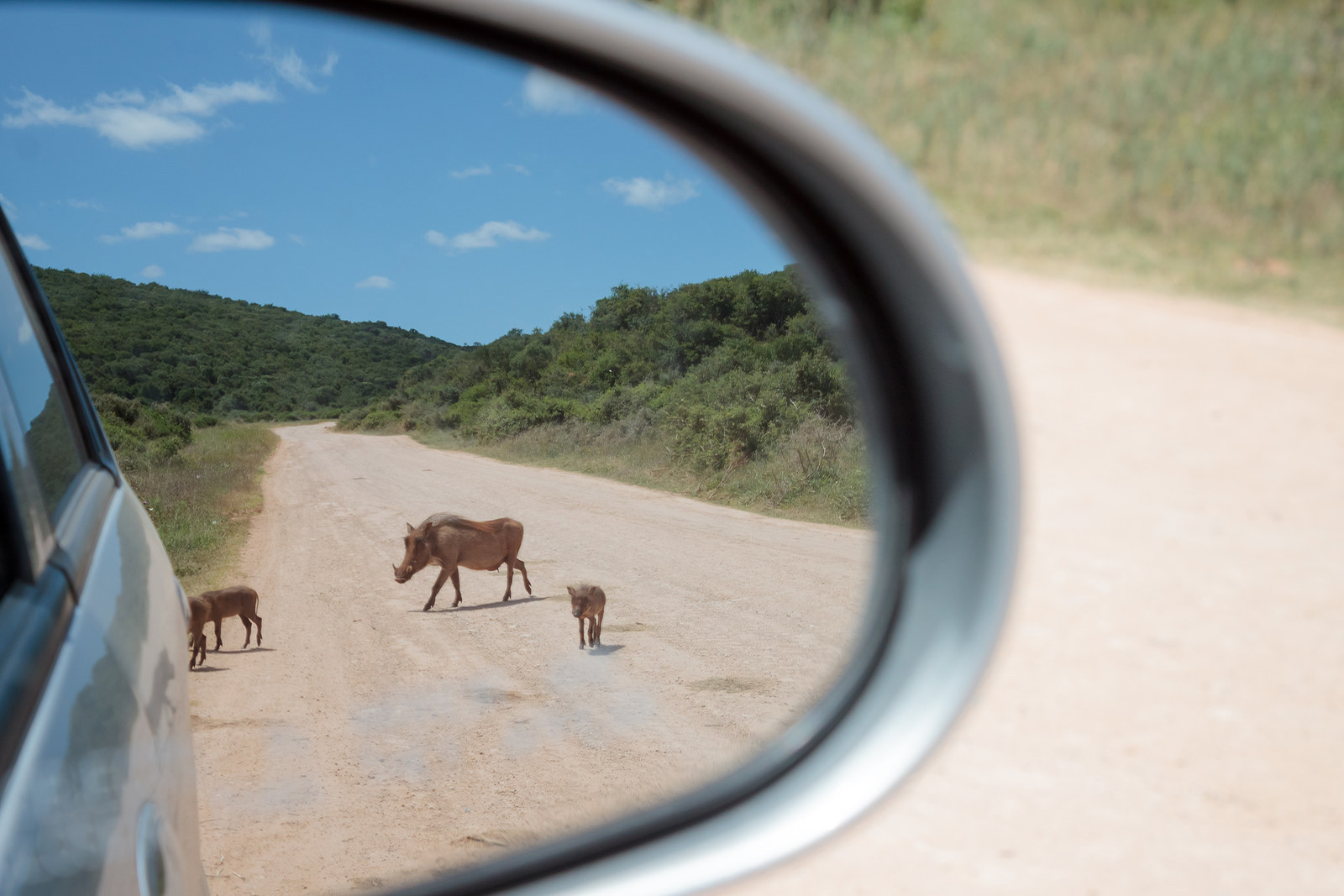 """Pumba In Your Rear View"", by Mario Lameiras, from Portugal"