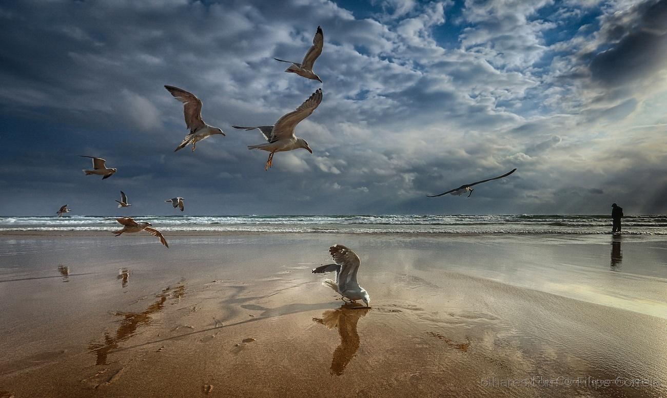 © Filipe Correia - As aves