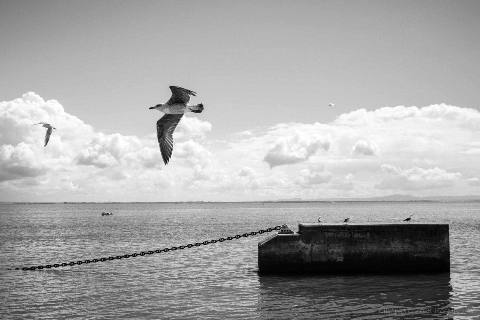 © Raquel Rita - o voo