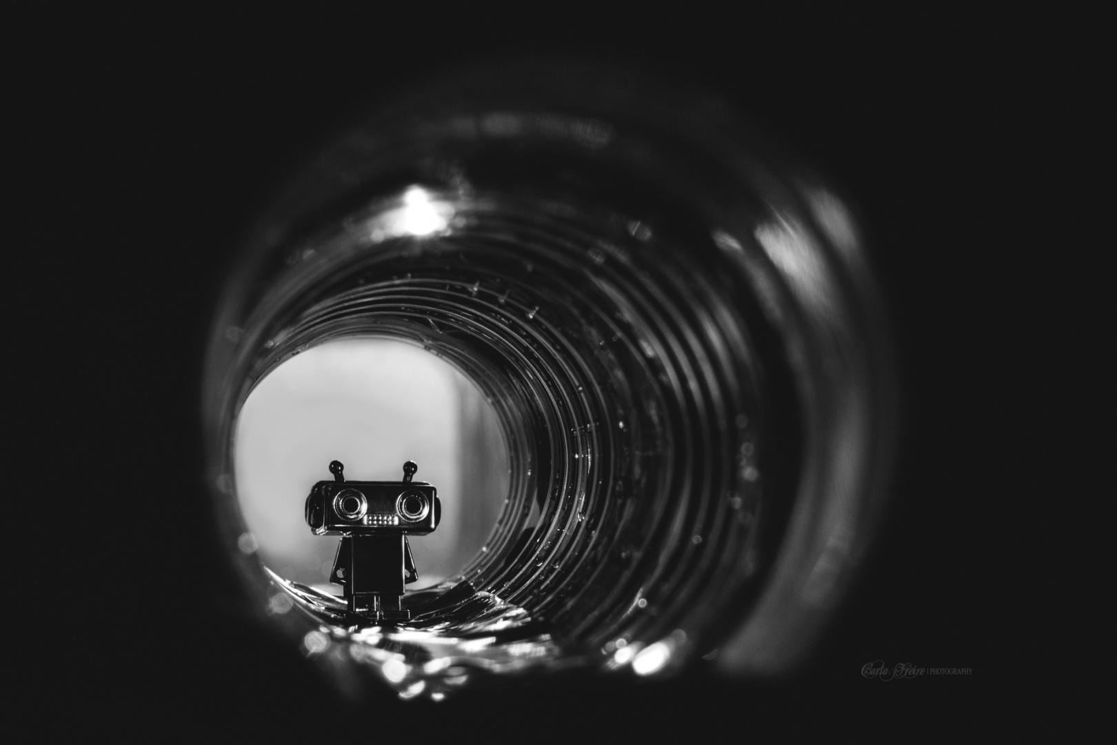 © Carla Freire - Exploring ...