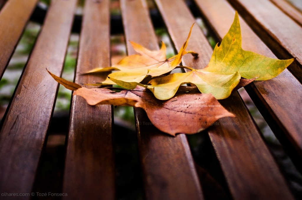 © Tozé Fonseca - Autumn leaves!