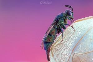 © Miguel Gameiro - vespa cuco