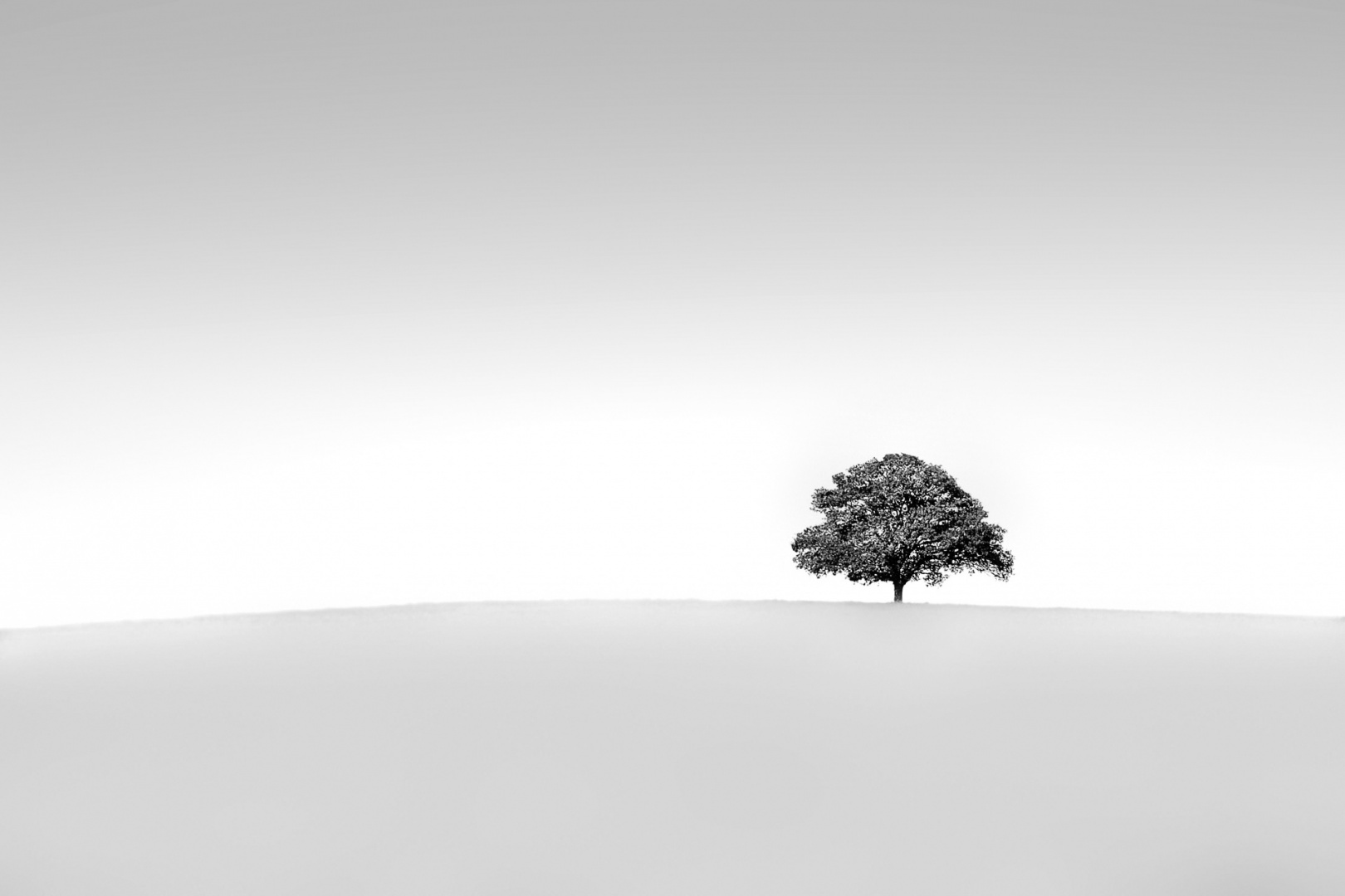 © Jose Antoine Costa  - The Tree in negative space.