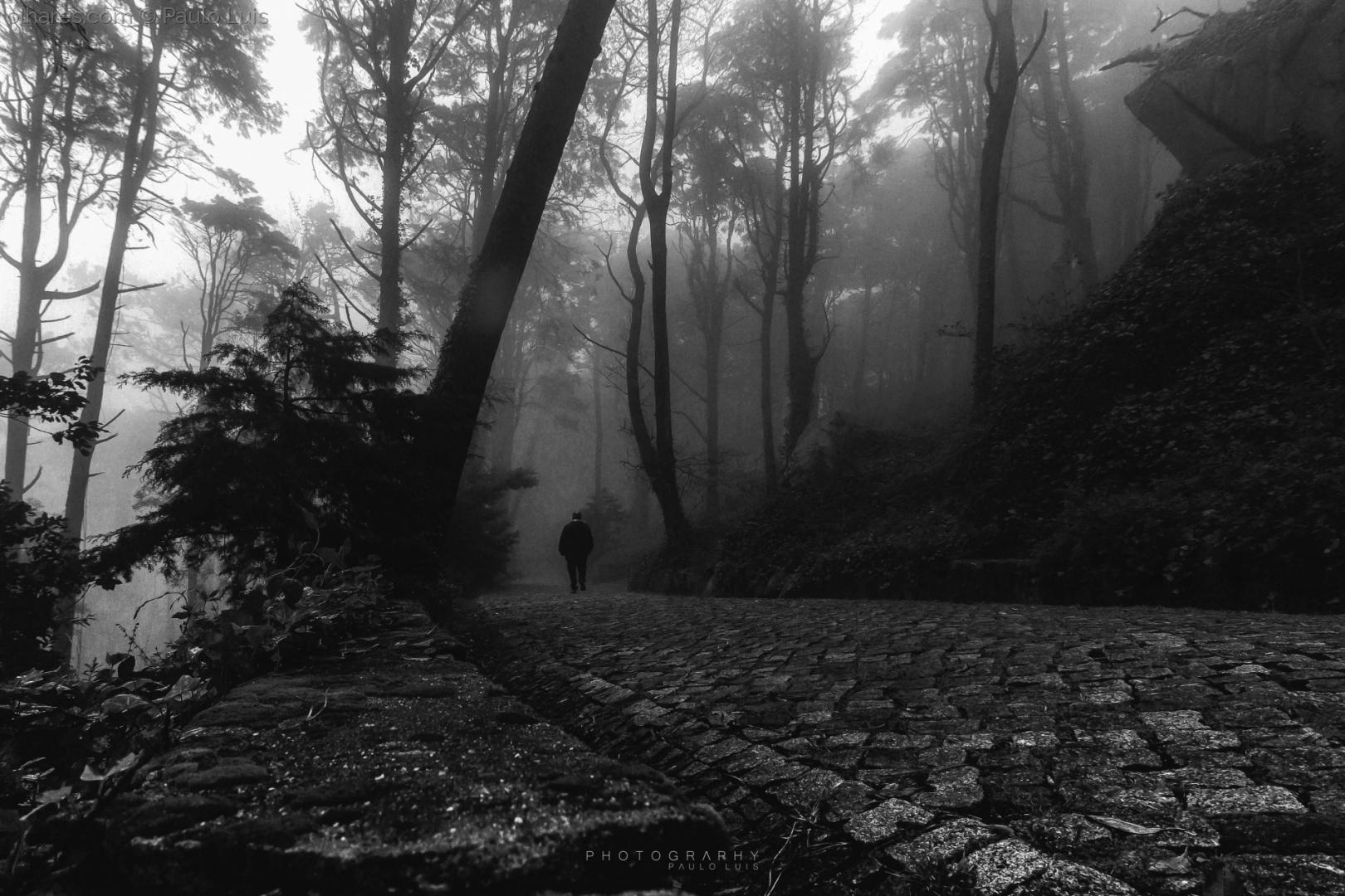 © Paulo Luis - No silêncio da Natureza...
