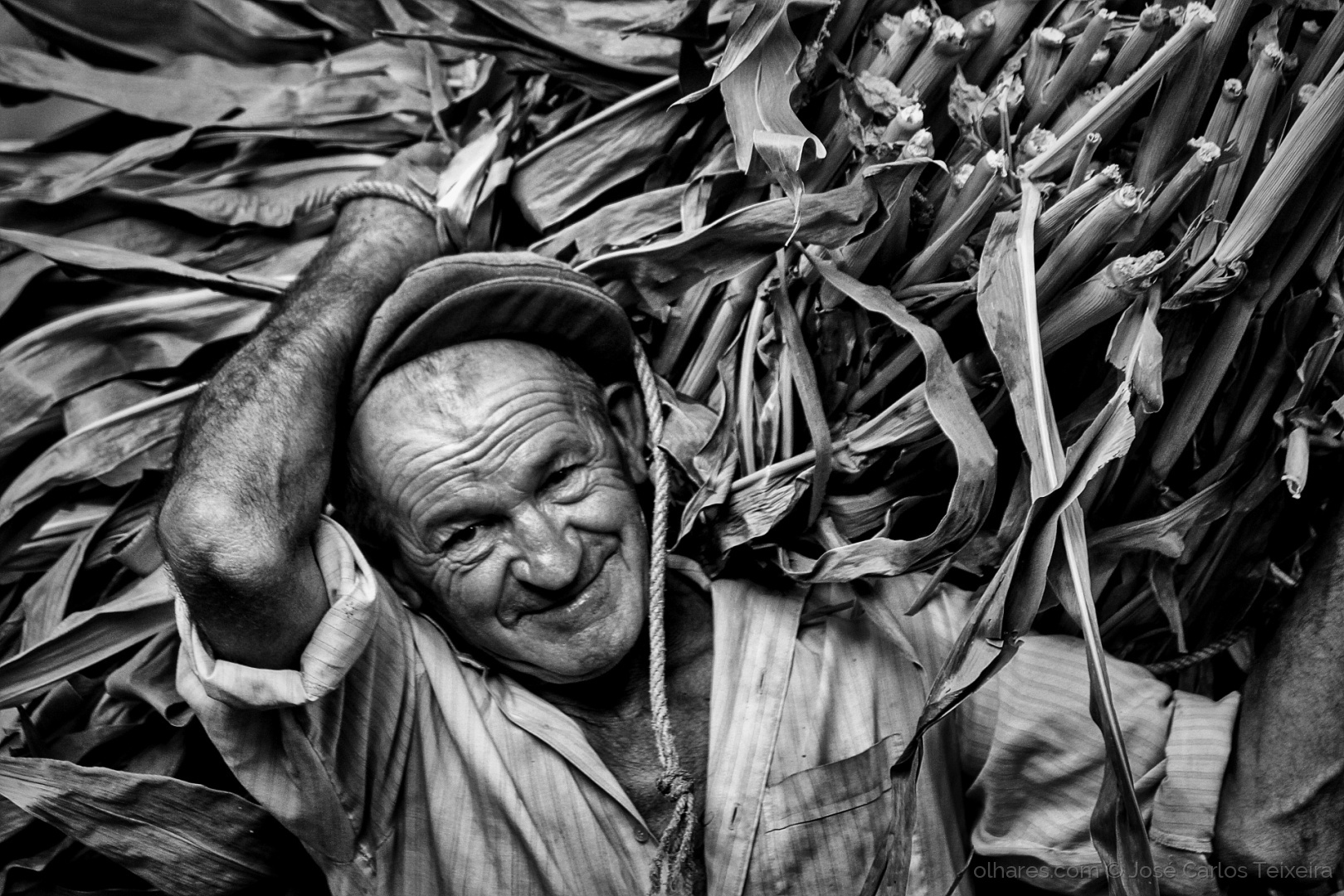 ©  José Carlos Teixeira - Lidas rurais