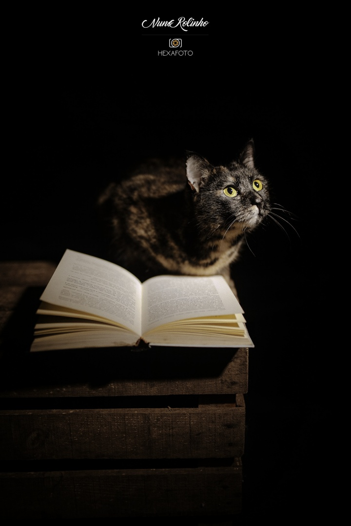 © Nuno Rolinho - Cat Reading