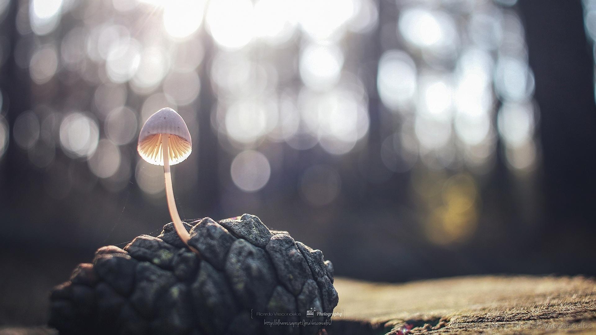 © Ricardo Vasconcelos - O pequeno candeeiro