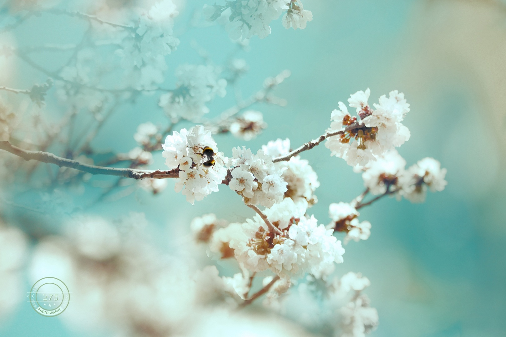 © 275Photography - fuubutsushi (a sense of spring)