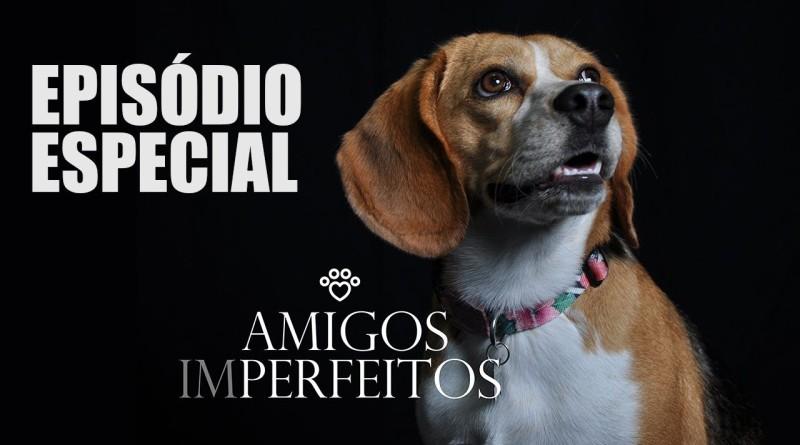 """""""Amigos Imperfeitos"""", uma iniciativa que ajuda Associações de Animais Abandonados"""