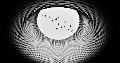 © jorge pimenta - A ilha dos pássaros