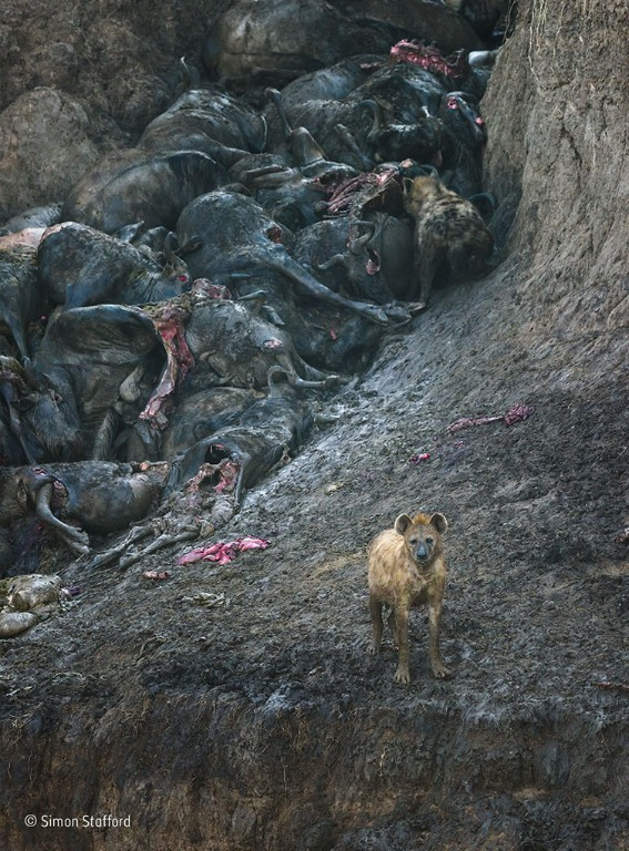 The aftermath © Simon Stafford - Wildlife Photographer of the Year