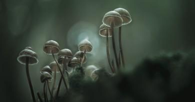 """© António Bernardino Coelho - """"Foggy morning"""""""
